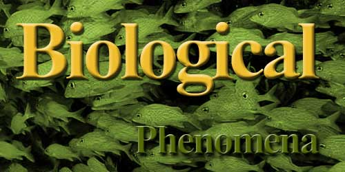 Biological Phenomenon